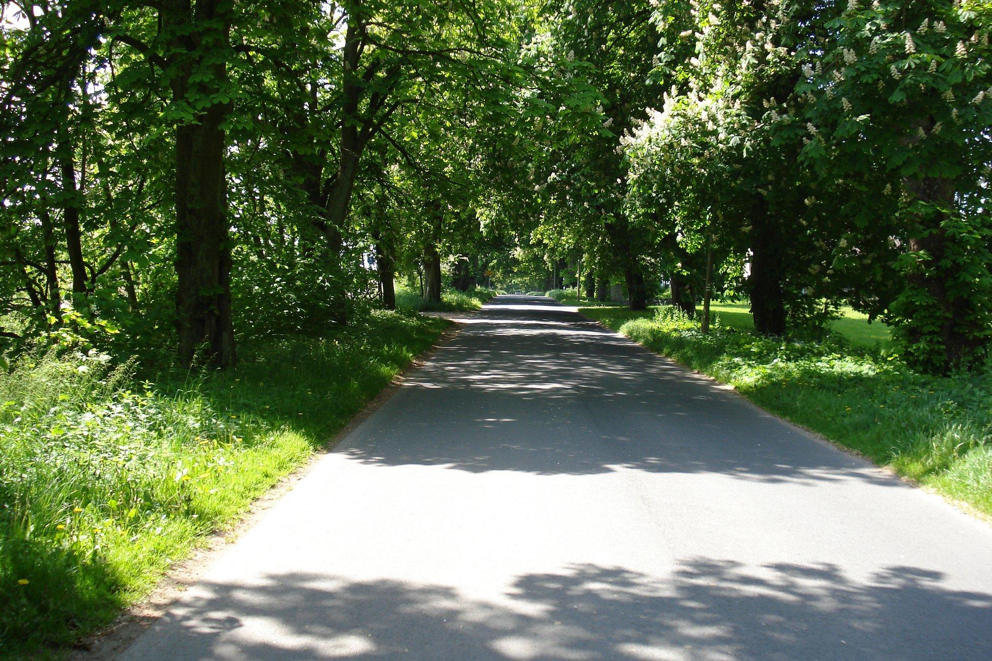 Allee Allee Eine Straße Viele Bäume