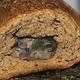 Brot mit tierischen Inhaltsstoffen ;)